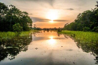 Fototapeta Rzeka w dżungli amazońskiej o zmierzchu, Peru, Ameryka Południowa