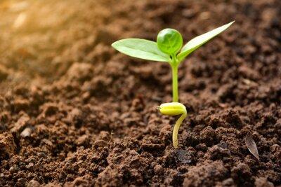 Fototapeta Sadzonki i uprawy roślin w glebie na tle przyrody