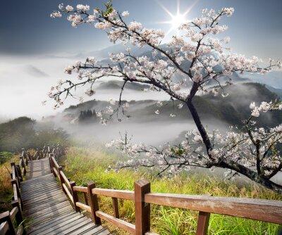 Fototapeta Sakura pocztówka adv celów innych lub użytkowania