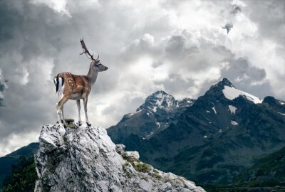 Fototapeta Samotny jeleń