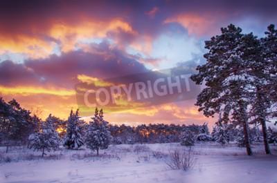 Fototapeta Scena zimowa, las śniegu o świcie, wielokolorowe niebo na wschodzie słońca