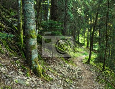 Fototapeta Scenic lato lasów górskich tło z omszałych drzew i ścieżki. Wędrówka koncepcji.