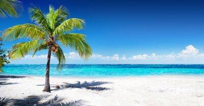 Fototapeta Scenic Plaża Coral z palmy