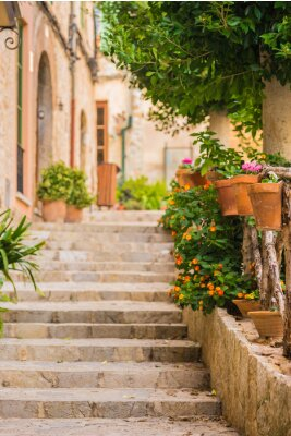 Fototapeta Schöne Stein Treppe mit Topfpflanzen dekoracji