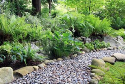 Fototapeta Ścieżka ogrodowa w cieniu lasu, wyłożona Hostą i paprociami.