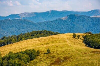 Fototapeta Ścieżka przez wyblakły trawiasta łąka alpejska