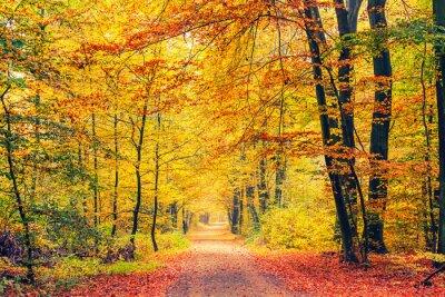 Fototapeta Ścieżka w lesie jesienią