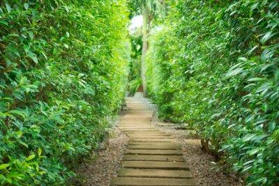 Fototapeta Ścieżka w ogrodzie