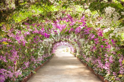 Fototapeta Ścieżka w ogrodzie botanicznym z orchidei okładzin hamulcowych ścieżki.