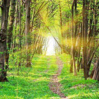 Fototapeta Ścieżka w pięknego zielonego parku