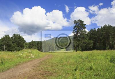 Fototapeta Ścieżka w pięknym lato lasów górskich.