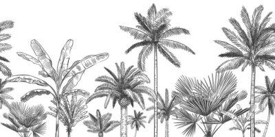 Fototapeta Seamless horizontal tropical background. Hand drawn palm trees, sketch exotic tropic jungle leaves and paradise palm tree vector wallpaper illustration. Exotic palm tree botanical, rainforest foliage