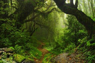 Las w Nepalu