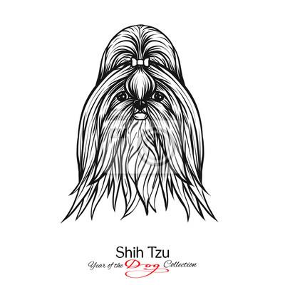 Fototapeta Shih Tzu Czarno Biały Graficzny Rysunek Psa