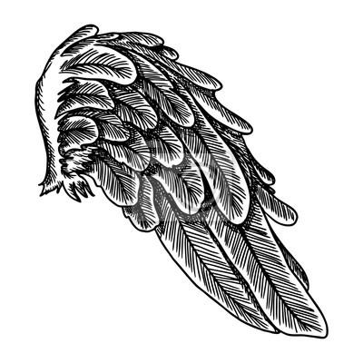 Skrzydło Anioła Ilustracja Na Bia Ym Tle Czarno Biały Styl