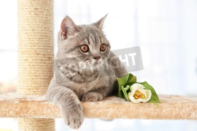 Fototapeta Śliczny kota lying on the beach na pazur ostrzarce z tulipanem w lekkim pokoju