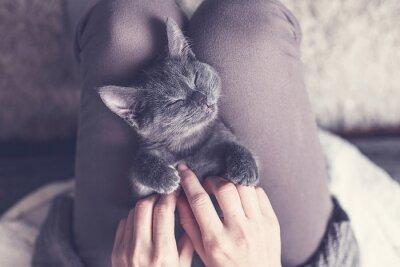 Fototapeta Słodki kociak drzemał