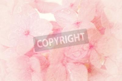 Fototapeta słodkie hortensje w stylu miękkiego kolor na morwy papieru tekstury dla tła