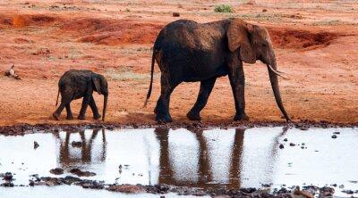Fototapeta Słoń w Tsavo East National Park