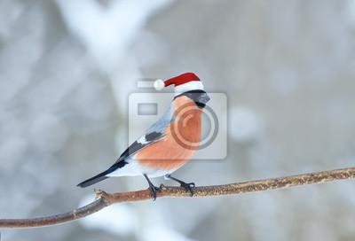 śmieszne Ptak Gil W Czerwony Kapelusz Santa Zima Boże Narodzenie