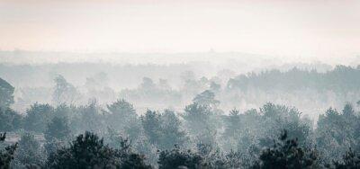 Fototapeta Sosnowy las zimowy w mgle.