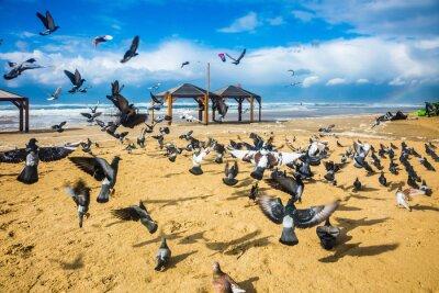 Fototapeta Stado gołębi jest głośno odbiega
