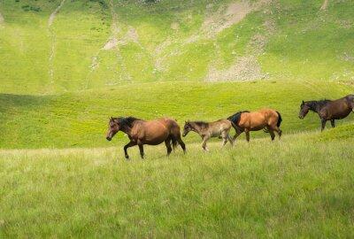 Fototapeta Stado koni chodzących wzdłuż górskiej łące