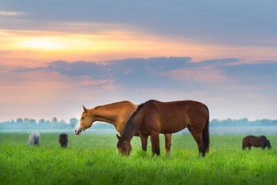 Fototapeta Stado koni na pastwisku na Sunrize