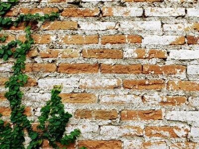 Fototapeta Stary mur ceglany z pnącza