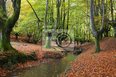 Fototapeta stream przez drzewa w pięknej buczyny jesienią