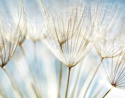 Fototapeta Streszczenie kwiat mniszka