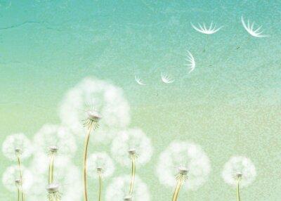 Fototapeta Streszczenie tle z kwiat mniszka lekarskiego