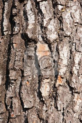 Fototapeta struktura drewna