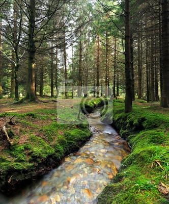 Fototapeta Strumień w lesie otoczony pięknym scenics