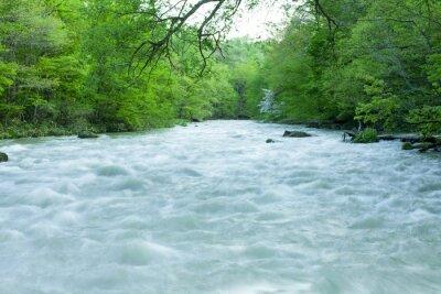 Fototapeta Strumień w zielonym lesie