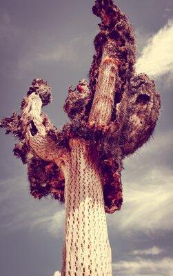 Fototapeta Suchy kaktus giant na pustyni, Argentyna