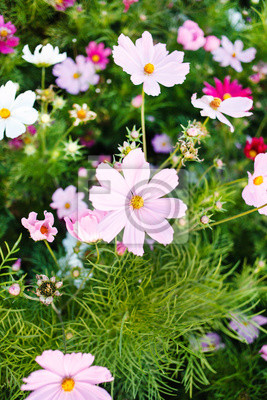 Fototapeta summer flowers