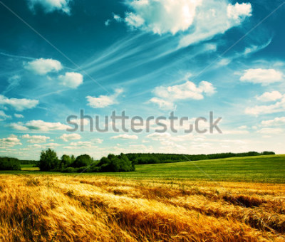 Fototapeta Summer Landscape with Wheat Field and Clouds