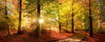 Fototapeta Sunlit path in a park before sunset