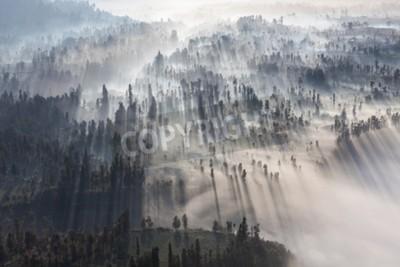 Fototapeta Sunrise w lesie niedaleko wulkanu Bromo, Jawa, Indonezja