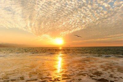 Fototapeta Sunset Ocean Ptaki