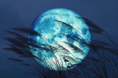 Fototapeta super full harvest moon on night sky back grass flower in the field