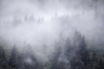Fototapeta Świerkowe drzewa w nadmorskiej mgle na Alasce