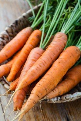 Fototapeta świeże marchewki pęczek