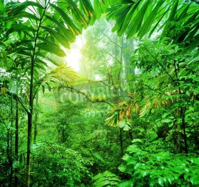 Fototapeta Świeże zielone lasy deszczowe w park narodowy Kostaryki, wspaniała dzika przyroda Ameryki Środkowej