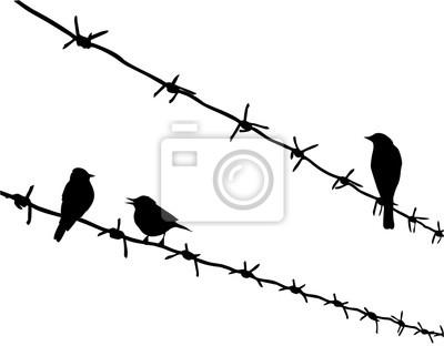 Fototapeta Sylwetka Trzy Ptaki Na Drut Kolczasty
