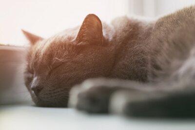 Fototapeta szary kot śpi na okno, vintage stonowanych