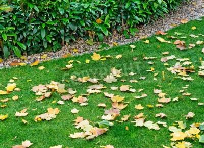 Fototapeta Szczegół ogród z liści jesienią
