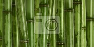 Szeroki trudno bambusa tle