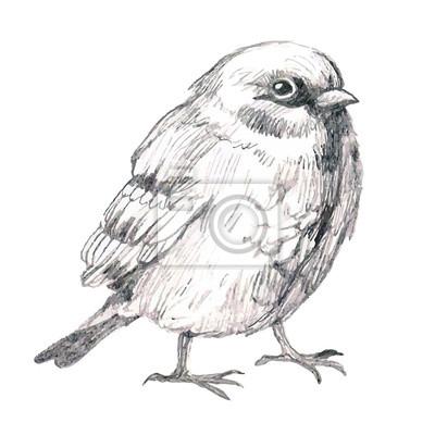 Szkic Ołówkiem Ilustracji Z Ptakiem Fototapeta Fototapety Wróbel